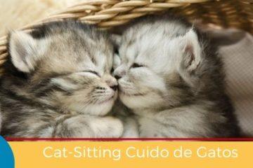 Cat-Sitting