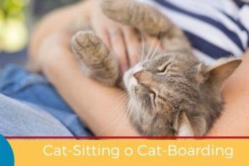 Cat-Sitting o Cat-Boarding