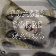 Instagram Frases sobre Gatos