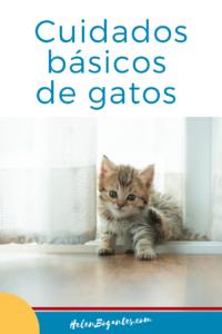 Cuidados básicos de gatos